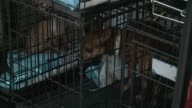 Rescued dogs moved from van into PAWS animal shelter in Chicago on April 13 2015 More than 80 animals were rescued from a puppy mill in Kankakee...