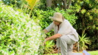 Retired woman gardening / Cape Town, Western Cape, South Africa