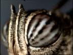 ECU Revolving around compound eyes of butterfly, Australia