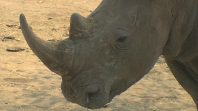 Rhino HQ 4:2:2