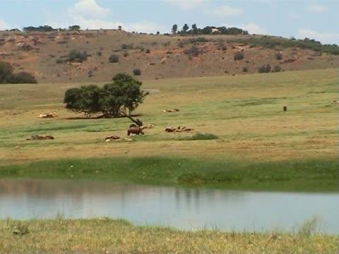Rhino in a savanna