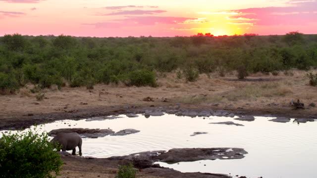 WS Rhinoceros By The Waterhole At Dusk