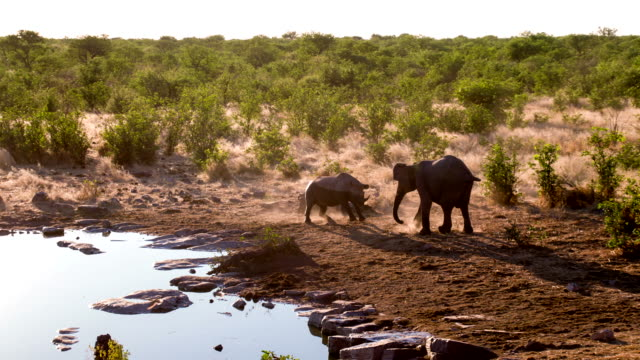 WS Rhinoceros Fighting With An Elephant