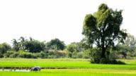Riso agricoltori in Tailandia