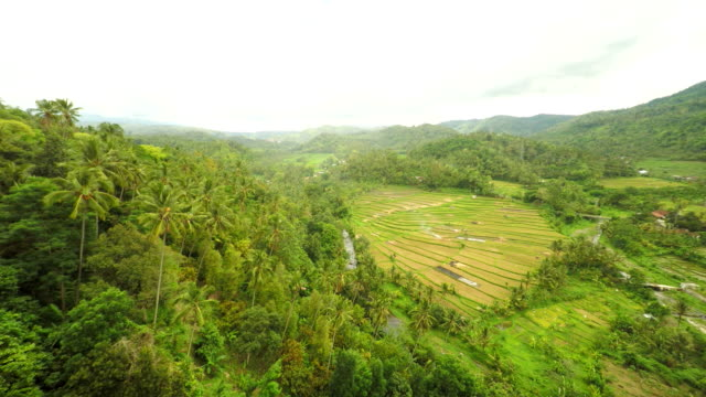 AERIAL Rice Fields Along The River In Bali