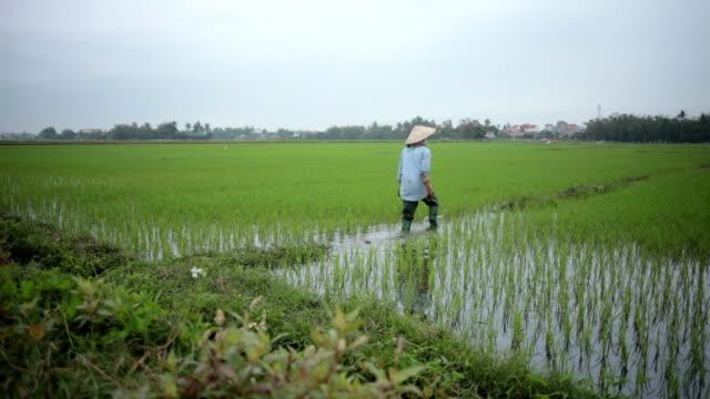 Rice Fields - Farmer