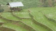 Rice fields on mountain.