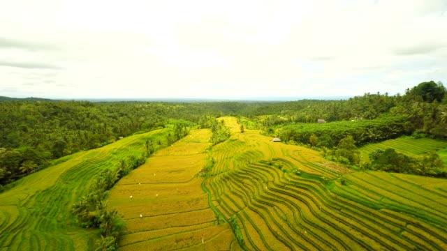 Veduta aerea di campi di riso
