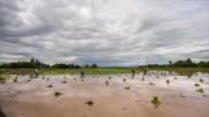 Reis Felder aus