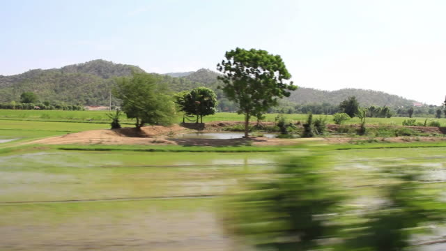 Rice fields, view from train.