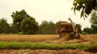 Rice harvest machinery