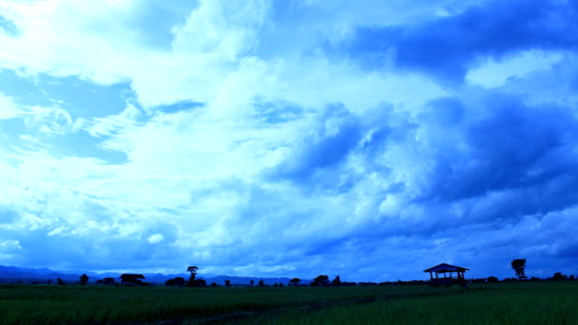 HD rice paddy and Clouds time lapse