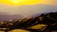 Rice paddy in Longsheng