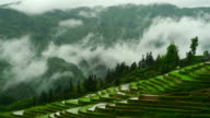 Rice paddy in spring season timelapse