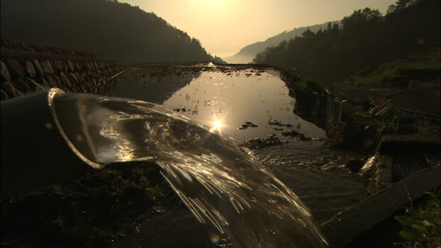 Rice paddy into which water is being poured: Medium shot