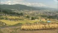 WS PAN Rice straw drying by traditional farming at terrace rice fields / Chikuma, Nagano, Japan