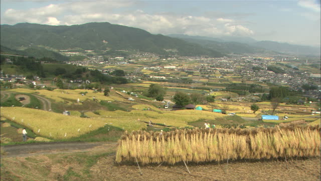WS PAN Rice straw drying by traditional farming at terrace rice fields / Chikuma, Nagano, Japan