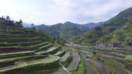 rice terrace fields near miao village in guizhou. 4k