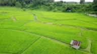 rice terrace in Pao Nan, Thailand