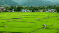 rice terrace in Pua Nan, Thailand