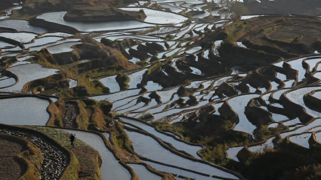Rice terraces built by Hani people a thousand years ago, Yuanyang County, S.W. Yunnan Province, China, Asia,