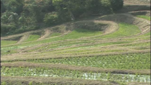 Rice terraces cover a mountain in Oyama Senmaida,Chiba