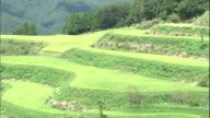 Rice terraces cover a mountain slope in Kochi, Japan.