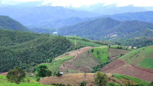 ZO/Rice terraces in northern Thailand.