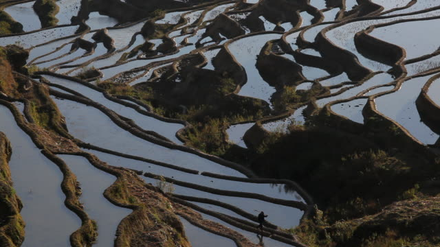 Rice terraces in the sunlight built by Hani people , Yuanyang County, S.W. Yunnan Province, China, Asia,
