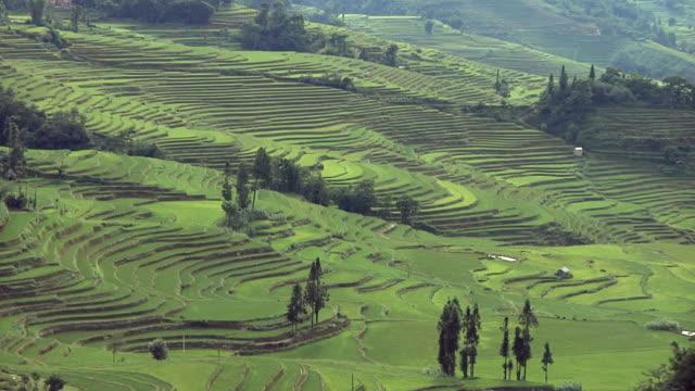 WS HA Rice terraces receding into distance / Yuanyang Rice Terraces, Yunnan, China