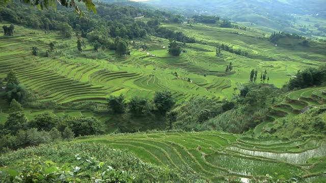 WS HA PAN Rice terraces receding into distance / Yuanyang Rice Terraces, Yunnan, China