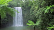 Rich green flora surrounds the  Millaa Millaa Falls, Atherton Tablelands nr Cairns, Queensland, Australia