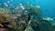 Rich marine life at the artificial reef