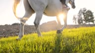 SLO MO Riding horse along a cultivated field