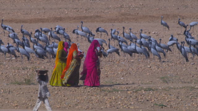 PAN right with 3 women walking with flock of Demoiselle cranes in background