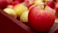 Ripe Organic Gala Apples