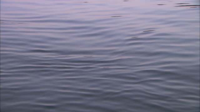 Ripples blow across the surface of the River Nile in Egypt.