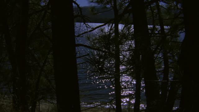 WS Rippling lake water glistening in moonlight through shoreline pines