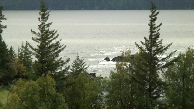 WS ZO River and trees / Anchorage, Alaska, USA