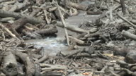 River flowing through logs caused by major landslide after earthquake at mount kinabalu