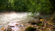 WS DS River In The Forest