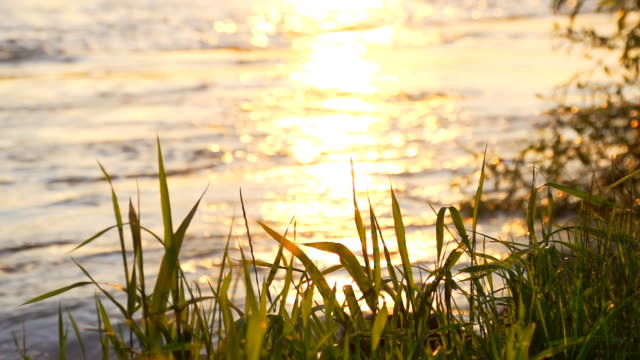 HD SUPER SLOW-MO: Riverbank At Sunset