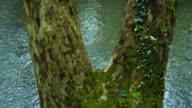 Riverbank in  the springtime