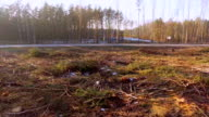 Road and Logging clear cut