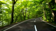 Straße in einem grünen Wald