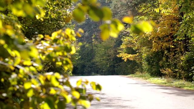 Weg in die herbstliche Wald.