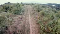 Road running through primary rainforest