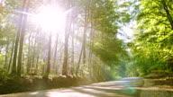 WS strada attraverso la foresta verde