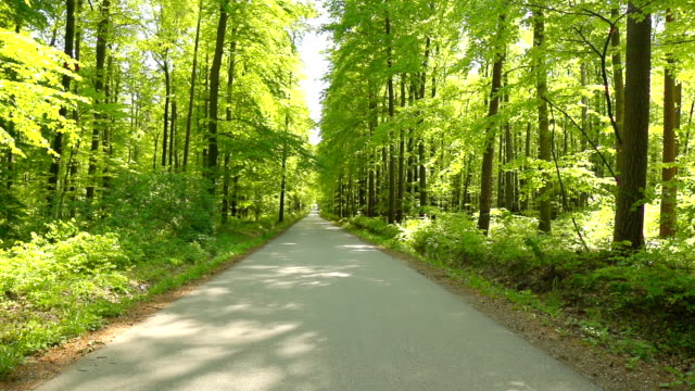 HD: Road Through A Green Forest