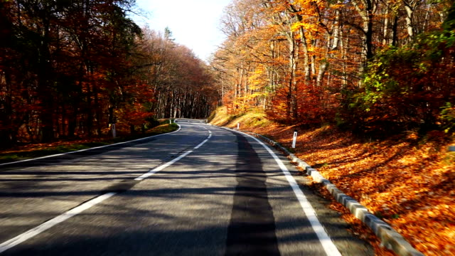 Road through forest in autumn